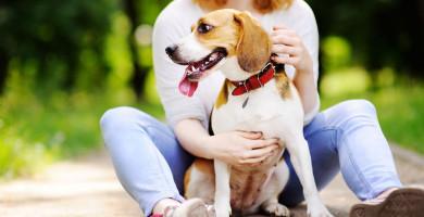 Como os cachorros podem ajudar a manter a saúde emocional em dia